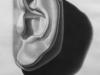 Michelangelo's Ear of David