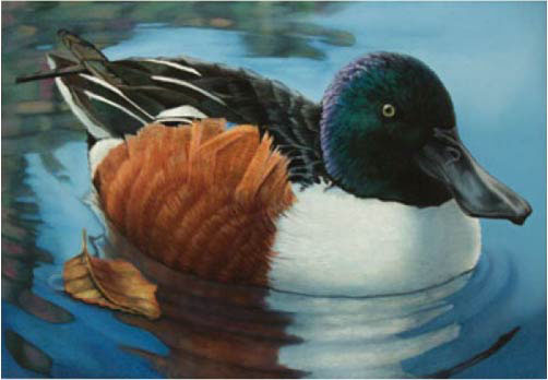 Edi Wadkins,Federal Duck Stamp Entry, Oil